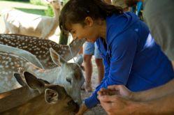 Parc animalier de Ste Croix - Morgane Bricard