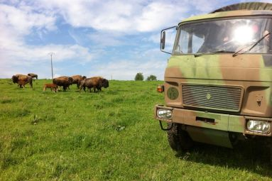 Ranch des Bisons