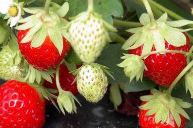 ©Les Petits Fruits de Vouxey